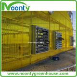 Casa verde de policarbonato ondulado amarelo para o Oriente Médio