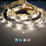 Alto brillo LED SMD 5050 Soga Tira de luz con TUV CE