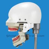 大学のための高品質のステンレス鋼の歯科幻影ヘッド