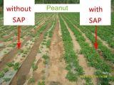 Material de bloqueio de água de poliacrilato de sódio Super SAP para Fazenda de polímero absorvente