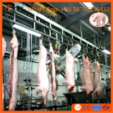 Completare la macchina della strumentazione della linea di macello del maiale della macchina del macello per la pianta del vitello dei maiali di Pblack del maiale della scrofa della madre del verro