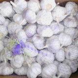 Buona qualità di aglio bianco fresco cinese