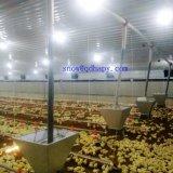 مزرعة دواجن تجهيز مع آليّة يغذّي نظامة على عمليّة بيع