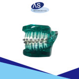 as/Brand hete Verkoop Damon zoals Orthodontische Zelf het Afbinden Steunen met Uitstekende kwaliteit