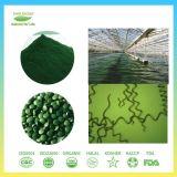 新しい方向製品の有機性Spirulinaの粉