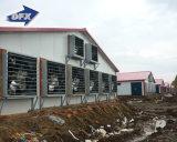Structure métallique de poulet de directeur 4 rangée de Chambre préfabriquée de couche pour la ferme avicole Tanzanie