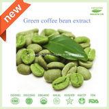 抗菌性の酸化防止剤の緑のコーヒー豆のエキス