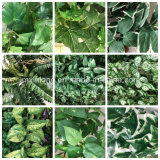 Boa qualidade de planta artificial Begonia