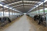 직접 공장 Prefabricated 강철 목장 또는 가축 야드