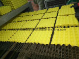 [وست ببر] مقتصدة يعيد ورقيّة بيضة صينيّة آلة