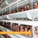 Sistema automático de la jaula de batería de las aves de corral de la granja de pollo