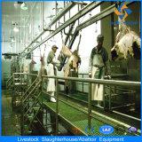 Abatedouro de ovelhas com equipamentos completos