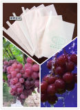 Wasser-Beweis-Antialters-Wetter-Beständiger Tafeltraube-Schutz-Beutel mit dem preiswerten Preis populär in Asien, Südamerika Markt