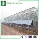 Serre chaude en verre Tempered de cavité d'agriculture avec le système de refroidissement