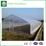 Serra di plastica di agricoltura per la verdura