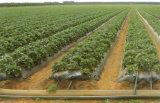 Аграрная лента потека для полива сада