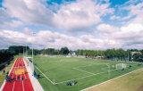 Трава Гуанчжоу искусственная, спорты трава, трава футбола (Y50)