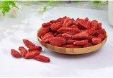 Getrocknete Wolfberry beste Qualität und niedriger Preis