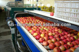5t/H Apple Juice Production Line