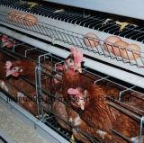 Gaiola automática da galinha da bateria do equipamento das aves domésticas