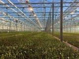PC Blatt-intelligentes Gewächshaus für modernes landwirtschaftliches