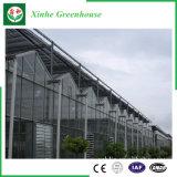 Estufas de vidro de cultivo de flores e produtos hortícolas
