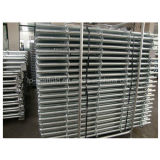 Armatura galvanizzata di Ringlock verticale/standard per i materiali da costruzione