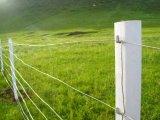 최고 가격 매듭 유형 제조 스테인리스 직류 전기를 통한 가축 공급 담 목초지 철망사 담