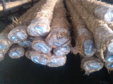 Barre ronde en acier de finition froide pour faire l'arbre