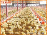 Strumentazione automatica personalizzata nella Camera del pollame con buona qualità