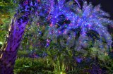 تألّق [ردغرين]+زرقاء حركة حديقة ليزر/ومض [لسر ليغت]