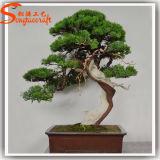 De hoge ImitatieBoom van de Pijnboom van de Bonsai van het Fiberglas Kunstmatige