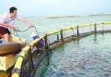 Cage de flottement de poissons de cage de pêche de HDPE/PE dans hauturier pour la mer Aquaculature