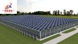 첨단 기술을%s 가진 광전지 온실