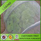 100% 새로운 HDPE 플라스틱 온실 반대로 곤충 그물