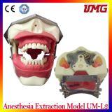 Modelo dental Um-L2 da extração da anestesia dos produtos de China