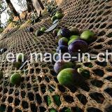 عذراء [ب] حصاد شبكة زيتونيّ اللّون مع مواد [أوف] ([يهز-هون06])