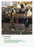 شامة طباعة [فينيشينغ جنت] صوديوم طحلبات مع سعر جيّدة