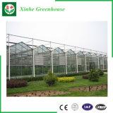 Multi Überspannung Agricultureal Gewächshaus-Glastyp preiswertes Gewächshaus