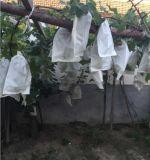 China-Hersteller-direkt Papiertüten für frische Frucht-wachsendes