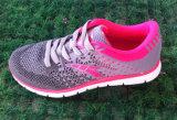 مصنع باع بالجملة إمداد تموين [موق] منخفضة رياضة أحذية [رونّينغ شو] حذاء