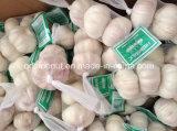 Nuevo Crop 3p Garlic