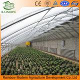 싼 가격 태양 온실을 설치하는 쉬운 임명 딸기
