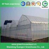 판매를 위한 최고 가격 다중 경간 농업 고딕 온실