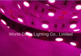 Het roze LEIDENE van de Kleur Licht van Sstrip met Ce & Certificatie RoHS