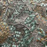 Цвет конструкции и вышивка сетки конструкции Coral