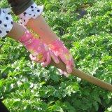 PU beschichtete im Garten arbeitenarbeitshandschuhe