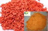 Extrait chinois de baies de Goji d'extrait de Wolfberry