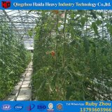 Clearly Hidroponica Polycarbonate Cover Selling Used Greenhouse for Tomato