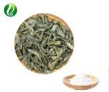 工場供給Ampelopsis Grossedentata/ツルの茶エキスの粉Dihydromyricetin 98%